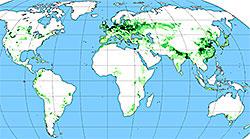 Her dyrkes verdens poteter. (Foto: Wikimedia Commons)