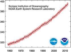 Innhold av CO2 i atmosfæren i ppm, målt på Mauna Loa-observatoriet. Den røde kurven er takkete fordi det brennes mer kull, olje og gass om vinteren enn om sommeren. Den sorte kurven er justert for sesongvariasjonen. (Foto: NOAA)