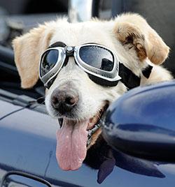 Er det hett og fuktig peser hundene, hos oss renner svetten. (Foto: Ap)