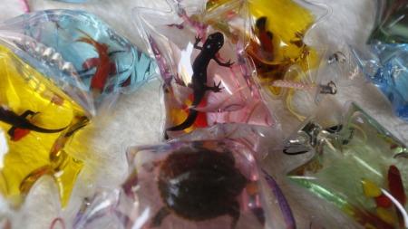 Selger Levende Skilpadder Innesperret I Plast