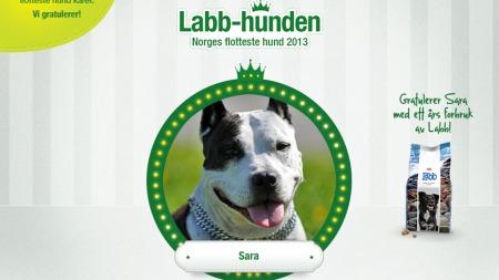 NORGES FLOTTESTE HUND: Amstaffen Sara ble stemt fram til å vinne tittelen «Norges flotteste hund 2013». Men hun fikk ikke premien, som var å pryde Labbs hundefôr-pakke. (Foto: Skjermdump fra Felleskjøpets sider)