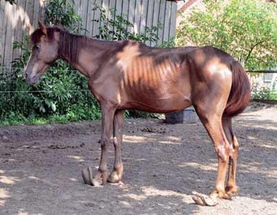 re til kambodsja heste kuk