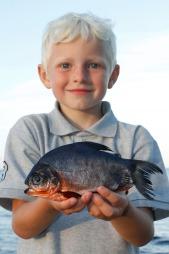 FOR LITEN: Fisken som ble funnet viste seg å være for liten til å ha tilhørt det lokale akvariet i byen. Hvor den kommer fra er derfor uvisst. (Foto: Henrik Carl)