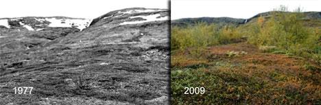 Det samme området i Abisko i Sverige fotografert med 32 års   mellomrom (Foto: Terry Callaghan)