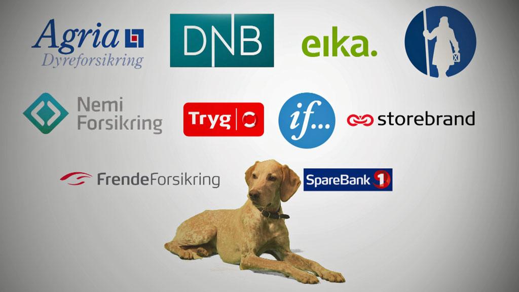 TV 2 hjelper deg tester forsikring til hund og katt