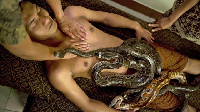 thai massasje sandefjord porno med dyr