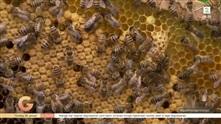 Bier har allerede våknet til liv, det bekymrer Blomster-Finn: – Dør insektene, dør vi også