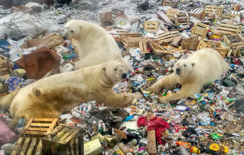 Klimakrisen fikk skylden - men mediene overså en viktig detalj