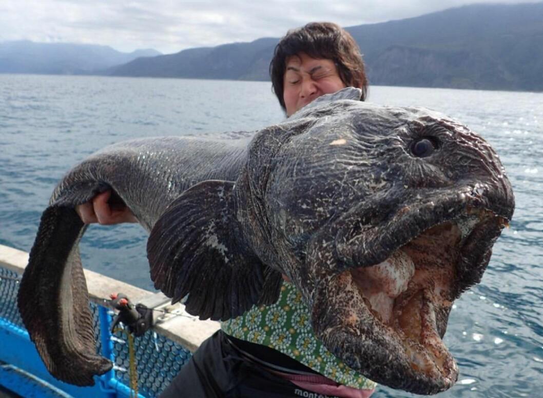fiske steinbit