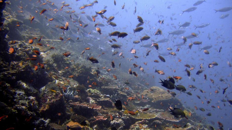Forskere mener det var økt havtemperatur som førte til masseutryddelsene i havet for 250 millioner år siden. Nå mener de vi er på vei mot lignende utryddelser.
